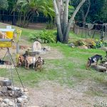 PHOTOS: The Kilimanjaro Safaris Building Mystery Has Been Solved in Disney World!