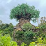 What's New at Animal Kingdom: Annual Passholder Ears and Disney Meme Pins!