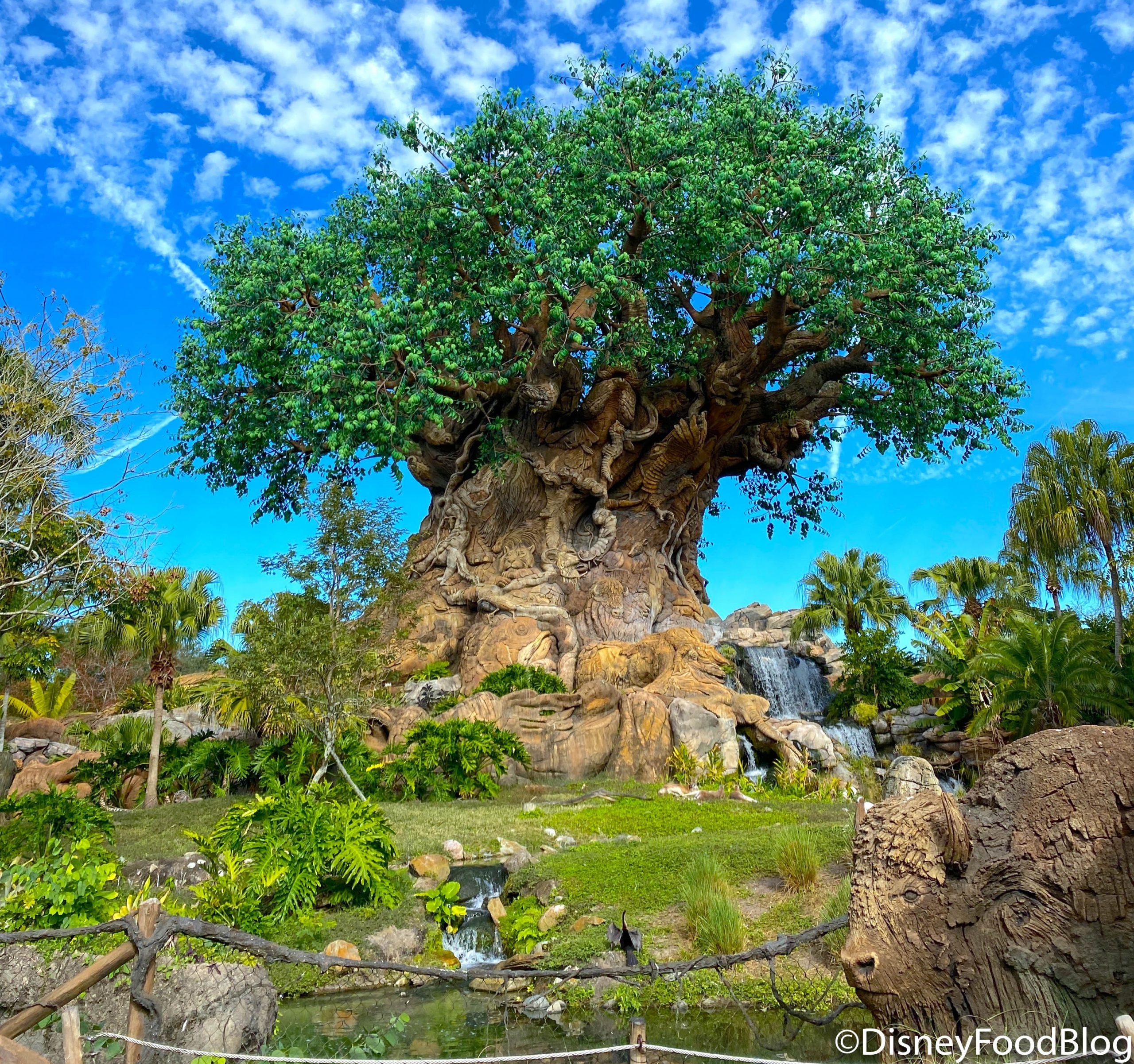 Passholder and Cast Member Options Park Hopper Disney Rain Jacket Disney Gift
