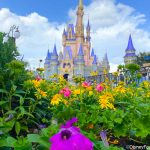 Disney World Park Passes REFILLED for February!