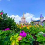 PHOTOS: Cinderella Castle Moat DRAINED in Magic Kingdom