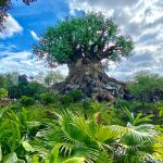 There's a NEW Baby and a MAJOR Ride Upgrade at Animal Kingdom